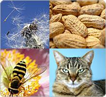 allergie nez, allergènes