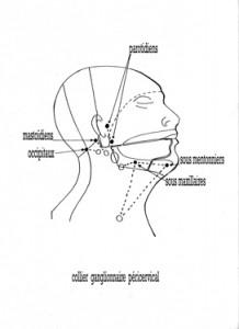ganglions du cou
