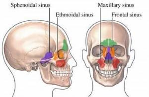 sinus anatomie